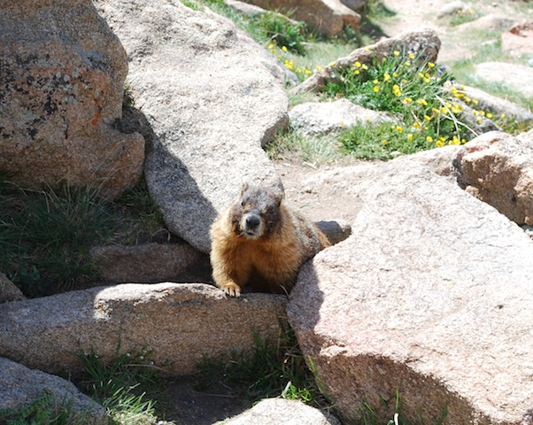 Rocky Mountain National park_b0121501_333014.jpg