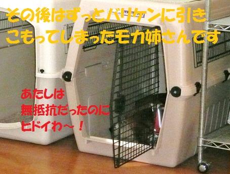 f0121712_15445262.jpg