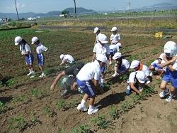 北新庄の大豆草取りありました☆_e0061225_16144239.jpg