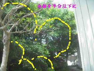 現場打ち合わせ・・・他_f0031037_21205898.jpg