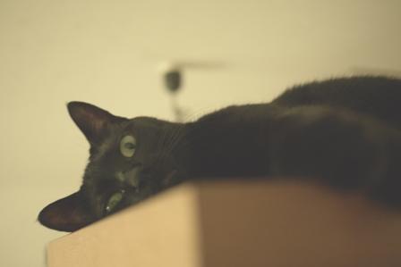 ぬけがら猫 のぇるろった編。_a0143140_22543469.jpg