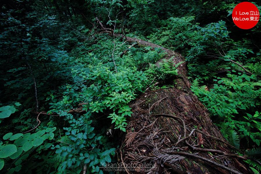 立山カントリーウォーク「森を感じる1日~大人の休日編」08 黄泉の国編_b0157849_1434534.jpg