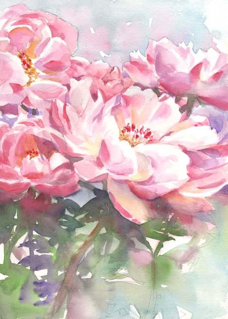 芍薬 水彩画_f0176370_16581491.jpg