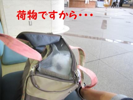 b0193480_1554753.jpg