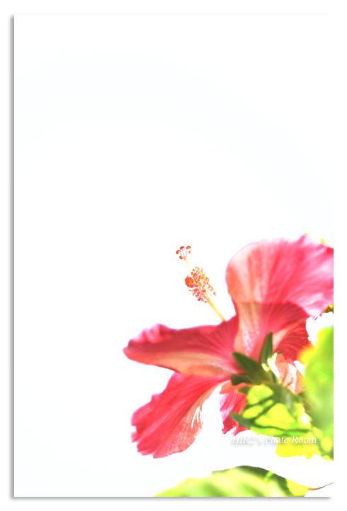f0142283_17512659.jpg