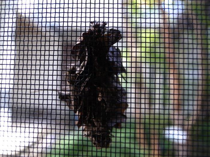 蓑虫の訪問_f0223603_2044189.jpg