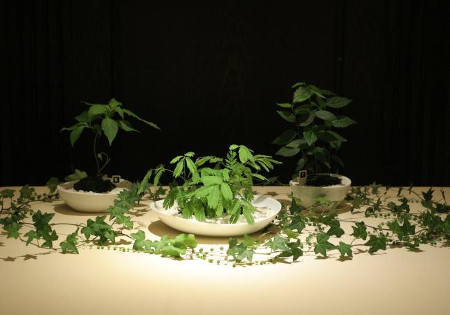 樹木という砂金 シェ松尾青山サロン様への装花_a0042928_19373081.jpg