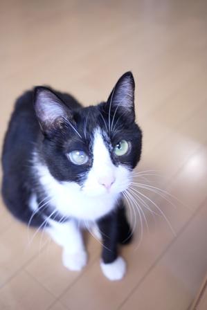 猫のお友だち 庄九朗くん来未ちゃん編。_a0143140_23414617.jpg