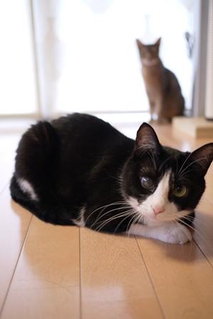 猫のお友だち 庄九朗くん来未ちゃん編。_a0143140_2347182.jpg