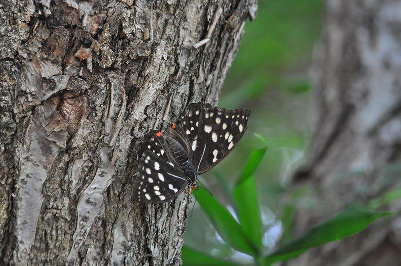 7月16日(晴れ時々くもり)タイトル:季節はずれのオオムラサキ_f0105542_18445196.jpg