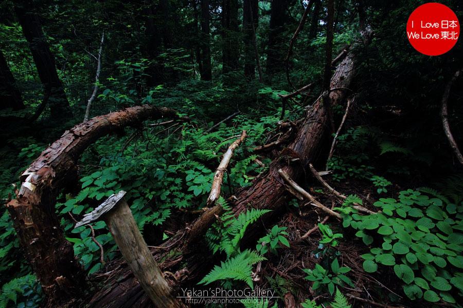 立山カントリーウォーク「森を感じる1日~大人の休日編」08 黄泉の国編_b0157849_15543371.jpg