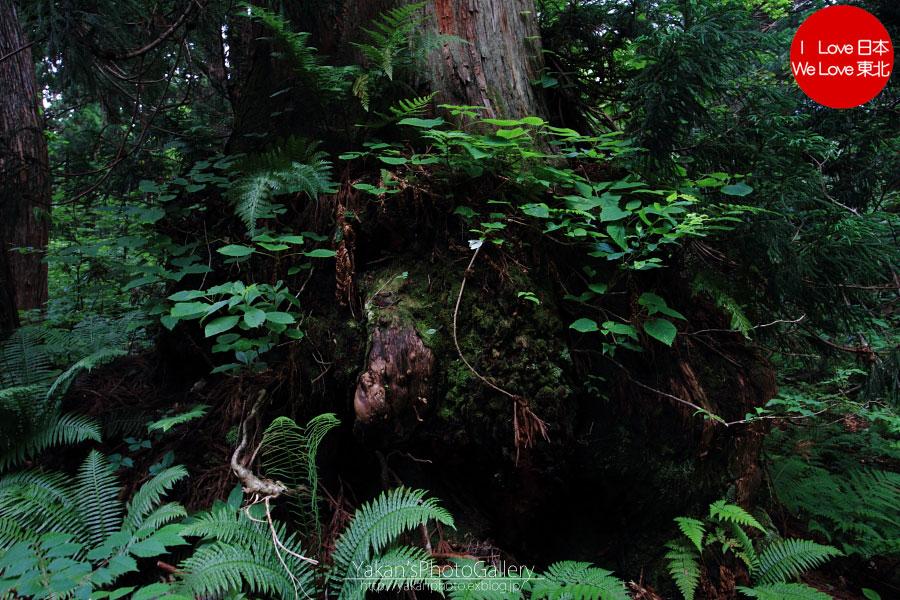 立山カントリーウォーク「森を感じる1日~大人の休日編」07 立山杉編_b0157849_15593021.jpg