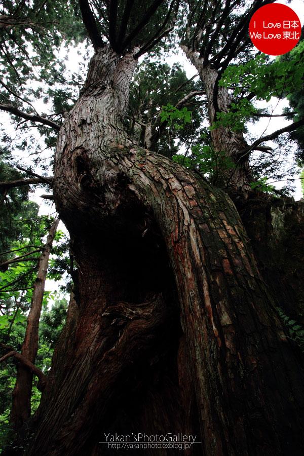 立山カントリーウォーク「森を感じる1日~大人の休日編」07 立山杉編_b0157849_1601568.jpg
