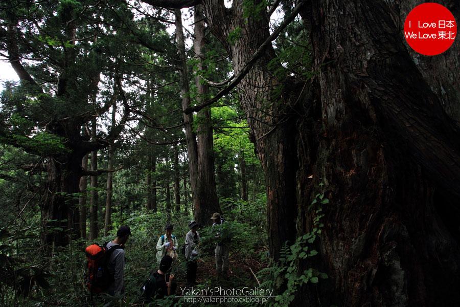 立山カントリーウォーク「森を感じる1日~大人の休日編」07 立山杉編_b0157849_1604041.jpg