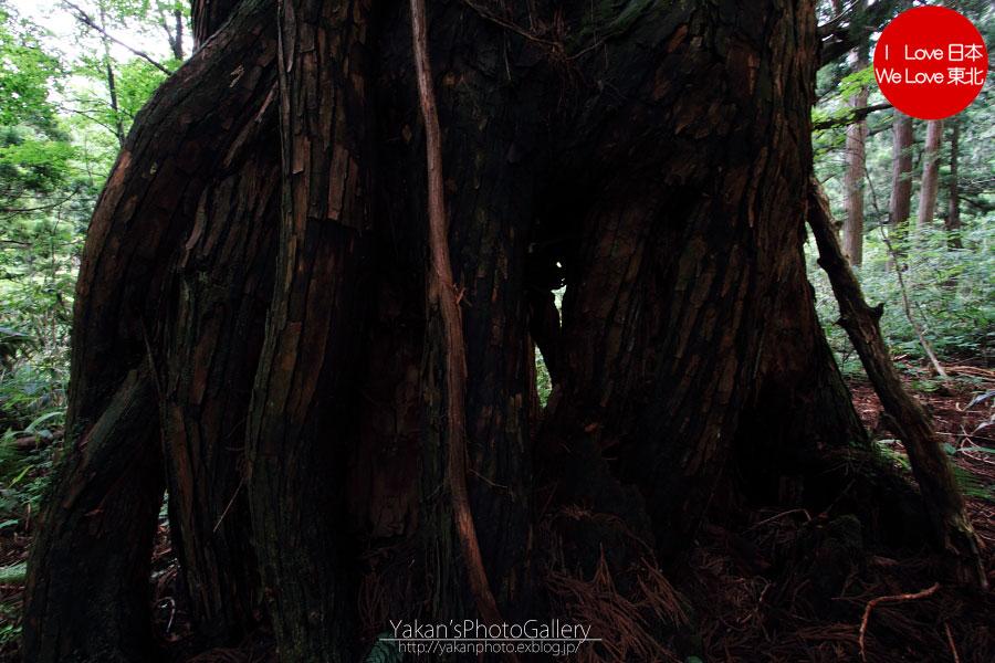立山カントリーウォーク「森を感じる1日~大人の休日編」07 立山杉編_b0157849_161350.jpg