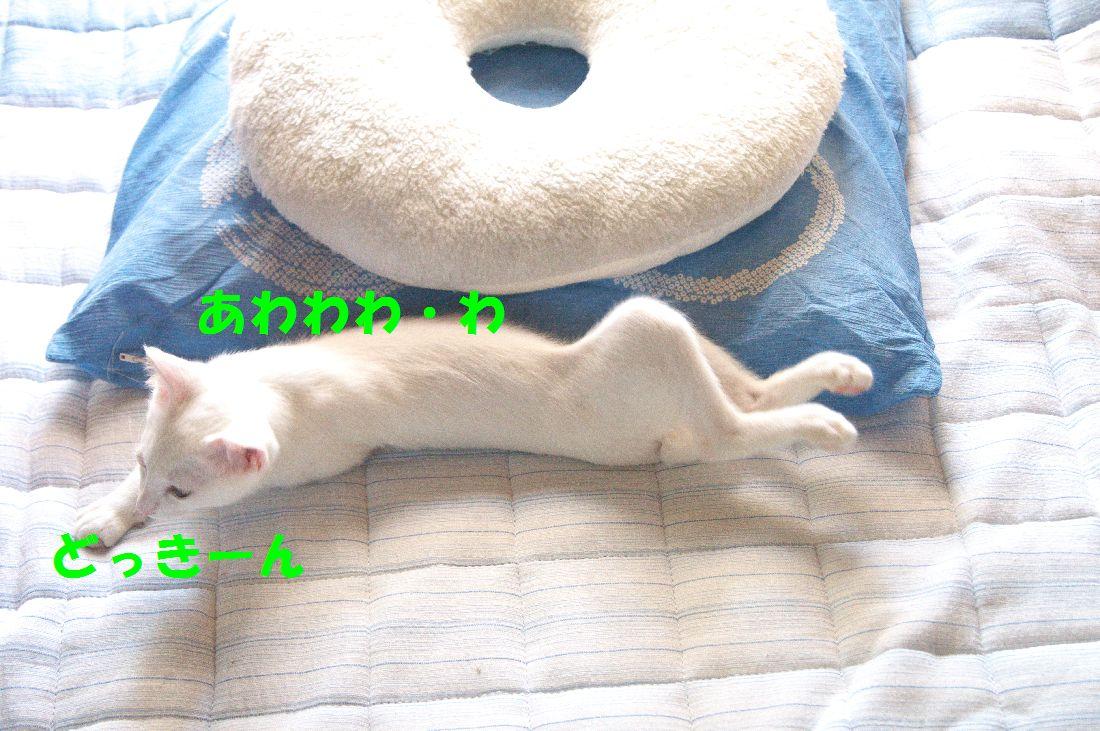 f0197682_0351460.jpg