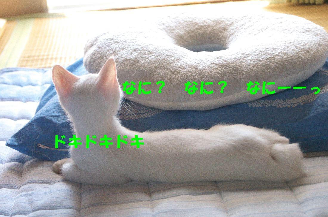 f0197682_0352161.jpg