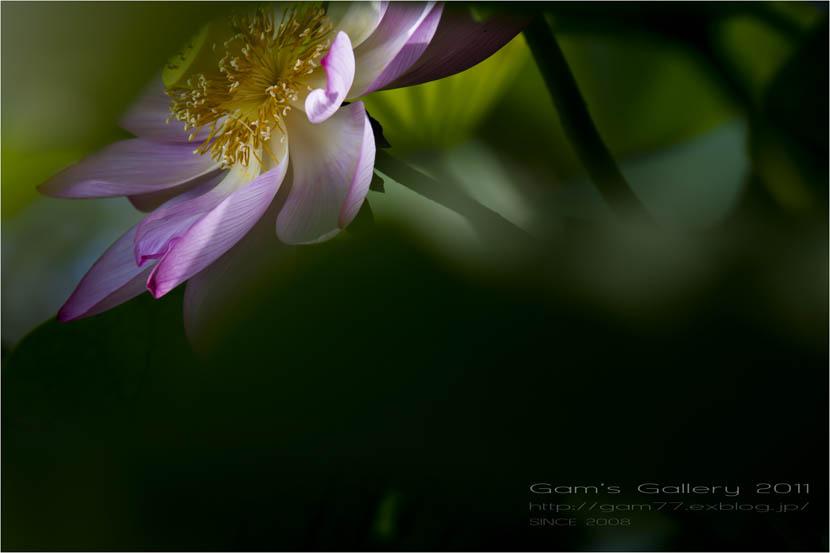 夢香花。。_f0195893_7574929.jpg