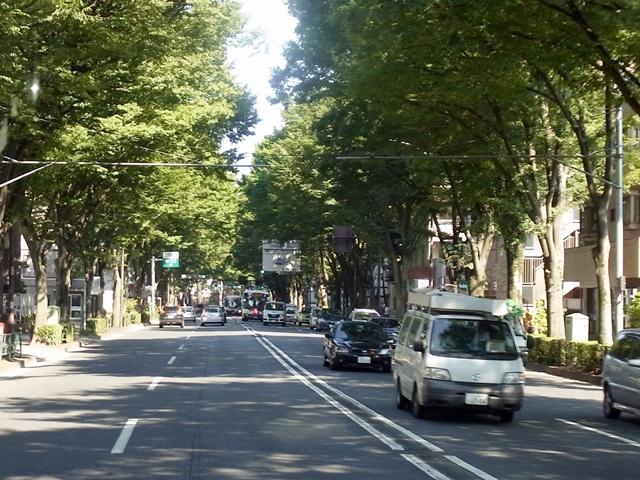 街路樹の効用_c0051102_14444872.jpg