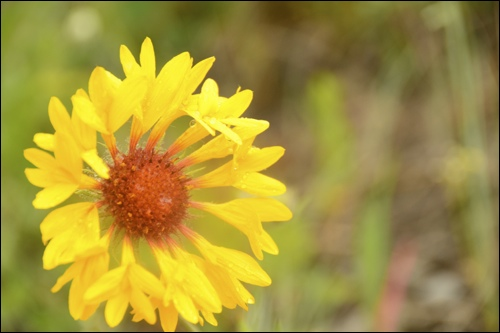 ヤムナスカショルダー 初夏の高山植物_d0112928_27834.jpg