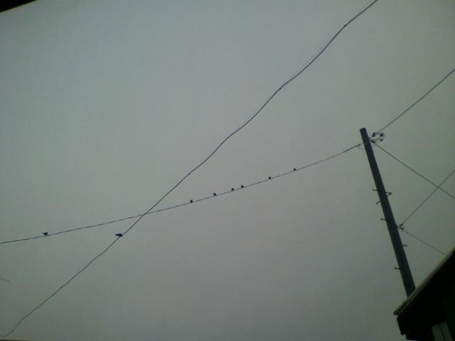 電線にツバメが_b0106766_1155766.jpg