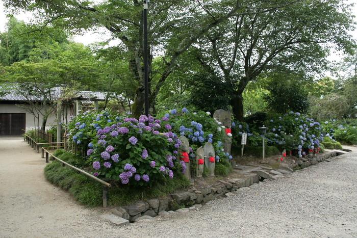 紫陽花 2011  <矢田寺>_f0021869_1282368.jpg