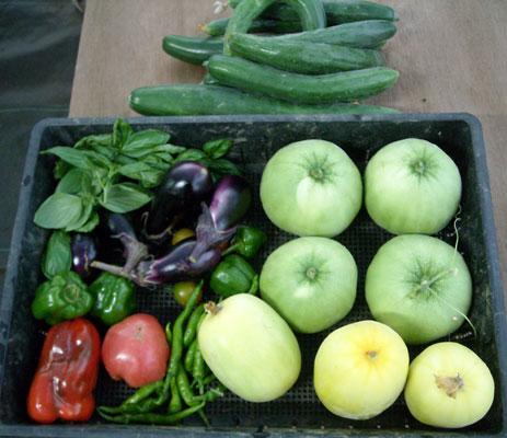 最近頂いた物(お魚、明日葉ラスク)&家庭菜園の野菜収穫 (シマトウガラシも初採取)_e0097770_1737447.jpg