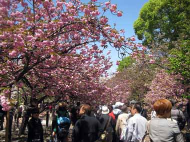 桜の通り抜け♪続き。_d0136282_2052959.jpg