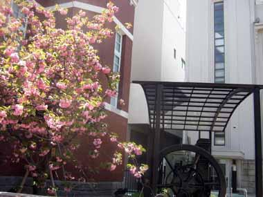 桜の通り抜け♪続き。_d0136282_2054540.jpg