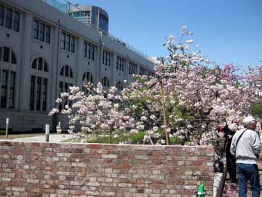 桜の通り抜け♪続き。_d0136282_2055794.jpg