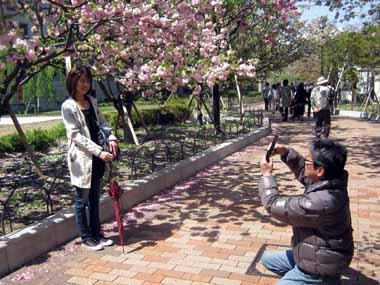 桜の通り抜け♪続き。_d0136282_2062199.jpg