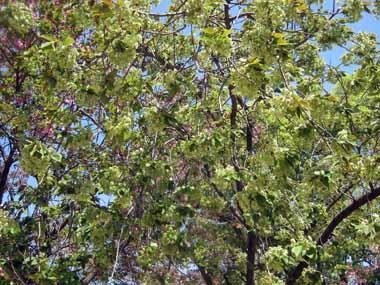 桜の通り抜け♪続き。_d0136282_206948.jpg