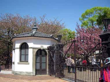 桜の通り抜け♪続き。_d0136282_2072926.jpg