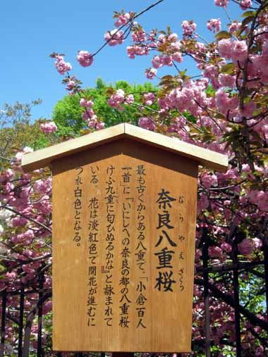 桜の通り抜け♪続き。_d0136282_207483.jpg
