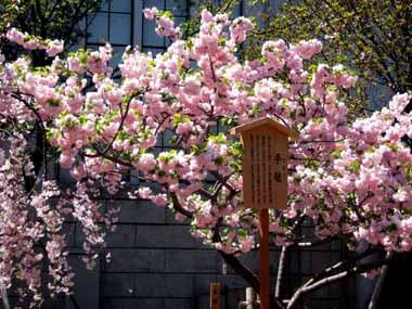 桜の通り抜け♪続き。_d0136282_2075682.jpg