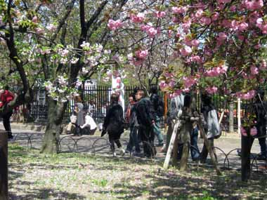 桜の通り抜け♪続き。_d0136282_2082291.jpg