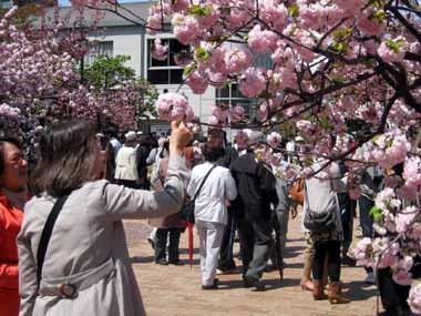 桜の通り抜け♪続き。_d0136282_2083294.jpg