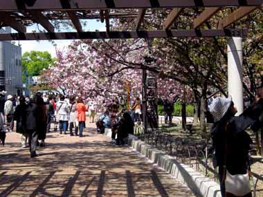 桜の通り抜け♪続き。_d0136282_20875.jpg
