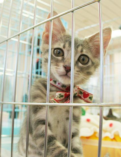 猫譲渡会へ!_d0071596_21151213.jpg