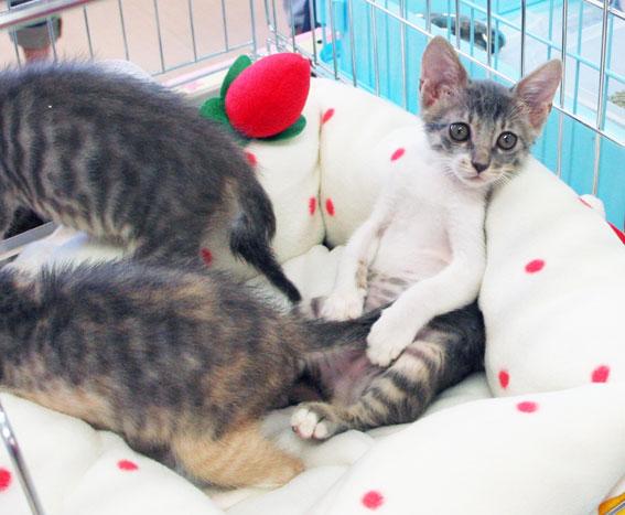 猫譲渡会へ!_d0071596_21182023.jpg