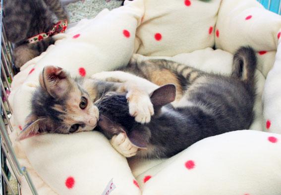 猫譲渡会へ!_d0071596_21184195.jpg