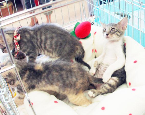 猫譲渡会へ!_d0071596_2118640.jpg