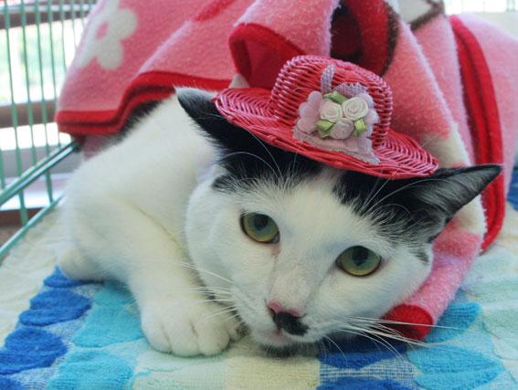 猫譲渡会へ!_d0071596_21301083.jpg