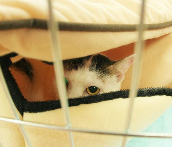 猫譲渡会へ!_d0071596_21315133.jpg