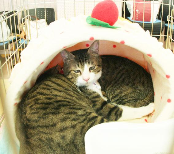 猫譲渡会へ!_d0071596_2131694.jpg