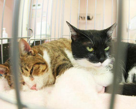 猫譲渡会へ!_d0071596_21331060.jpg