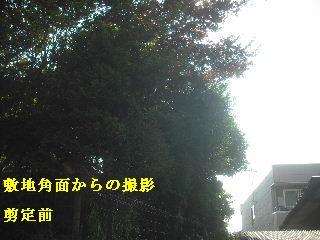 f0031037_1958990.jpg
