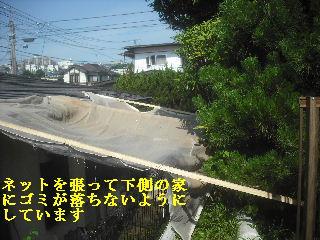 f0031037_203897.jpg
