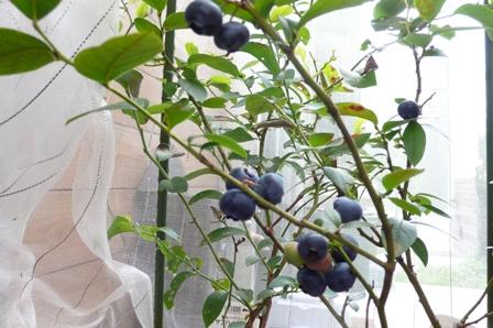 収穫?!_d0173654_1511231.jpg