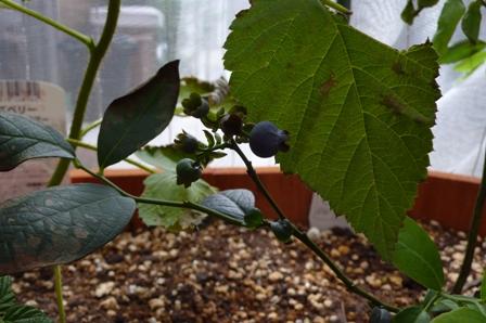 収穫?!_d0173654_1512557.jpg